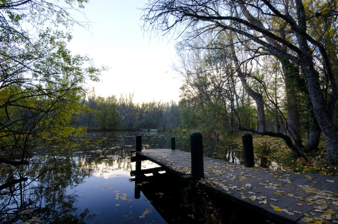 Bosque-Finlandes-Rascafria